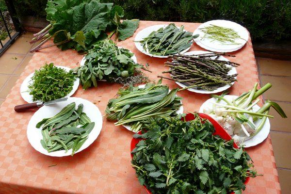 Verduras-silvestres